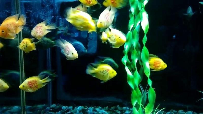 小型热带鱼混养搭配怎么样?得先搞清楚这些